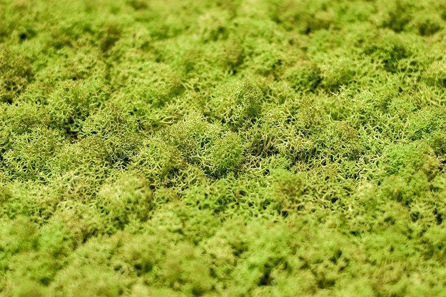 Zielone Sciany Ladeco