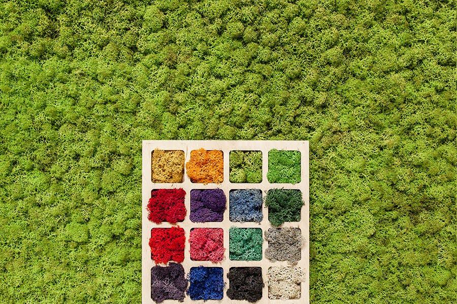 moss kolory